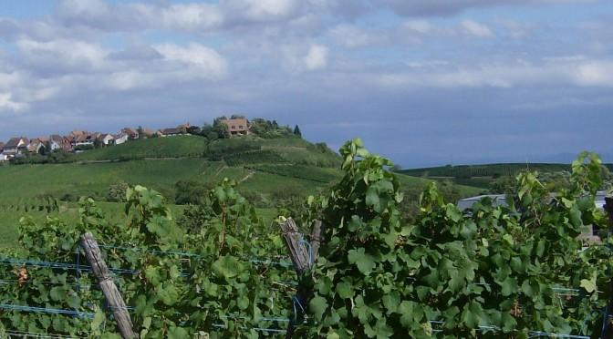 Rebsorten und ihre Aromen im Wein